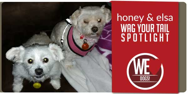 SitStay Wag Your Tail Spotlight - Featuring Honey & Elsa