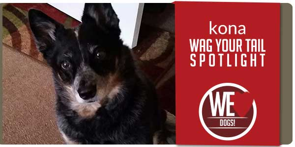 SitStay Wag Your Tail Spotlight - Featuring Kona