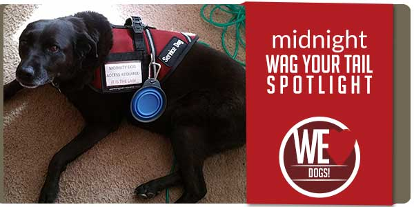 SitStay Blog Wag Your Tail Spotlight - Featuring Midnight
