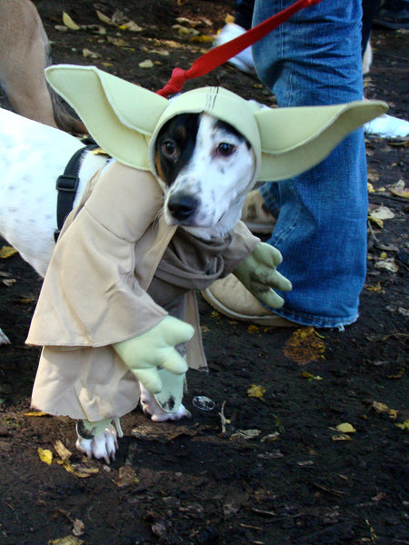 black and white dog wearing a Yoda dog costume