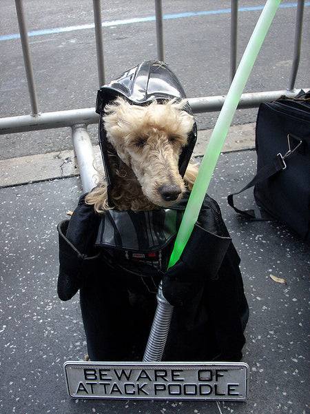 White fuzzy dog wearing a Darth Vader dog costume