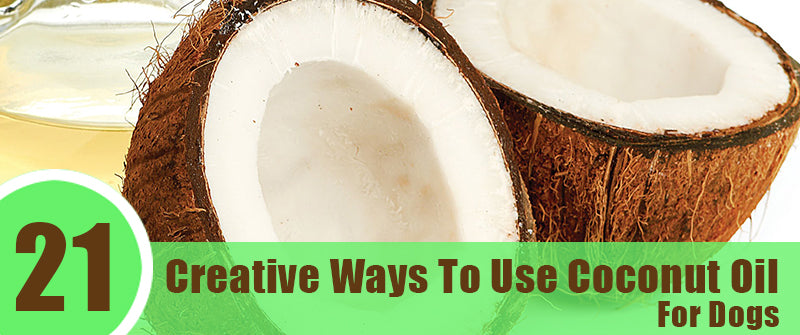 21 Creative Ways To Use Coconut Oil For Dogs SitStay