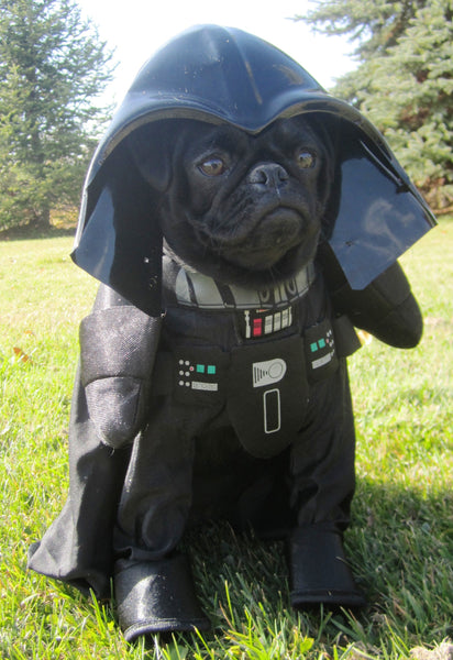 Black pug wearing a Darth Vader dog costume