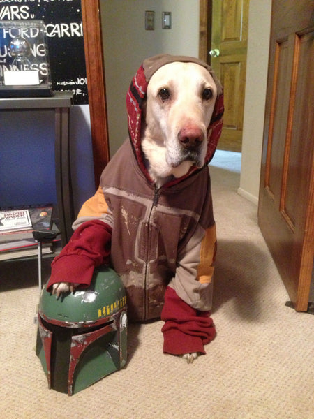 Yellow lab wearing a Boba Fett dog costume with its paw on the helmet