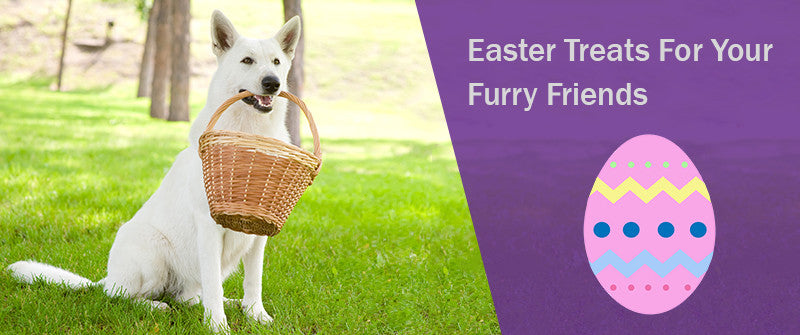 SitStay Blog Easter Treats For Your Furry Friends