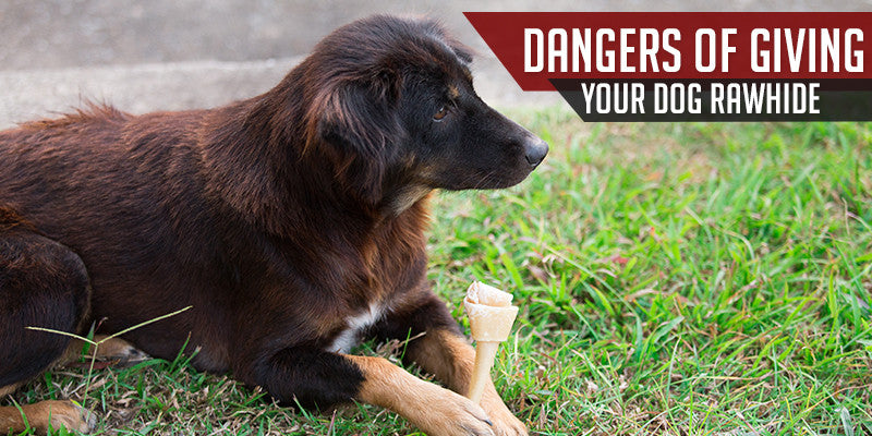 SitStay Blog Dangers of Giving Your Dog Rawhide