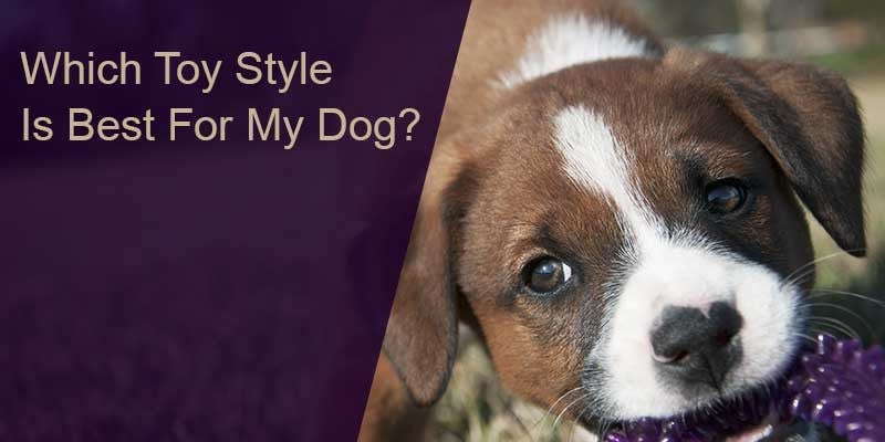 SitStay Blog Which Toy Style Is Best For My Dog?