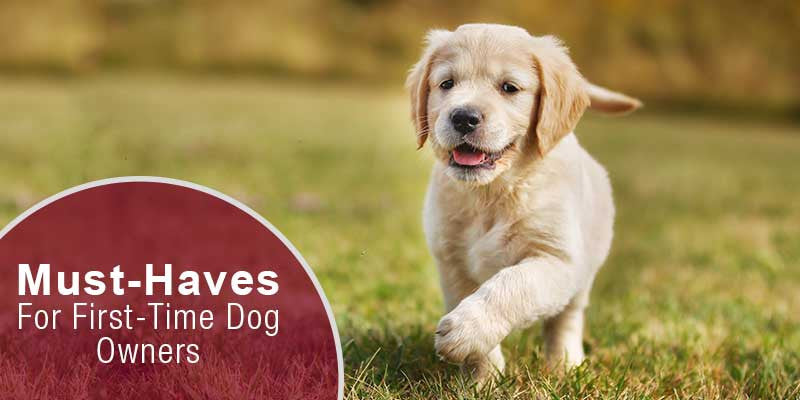 SitStay Blog Must-Haves For First-Time Dog Owners
