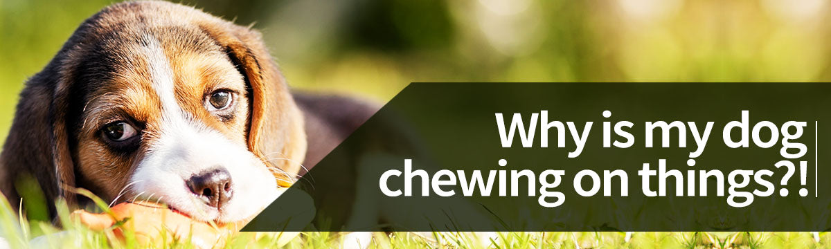 Advice on appropriate chewing for your dog