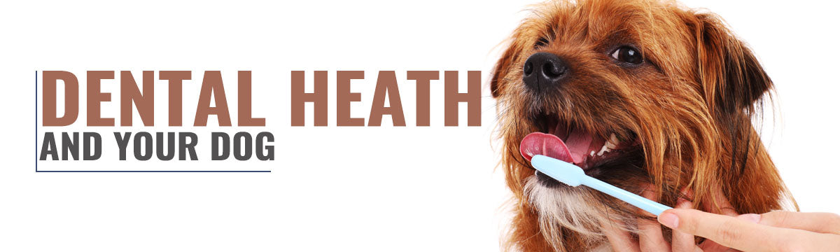 Advice on maintaining your dog's dental health