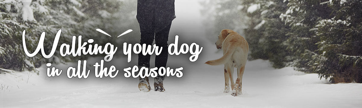 Keep your dog safe on all of their walks, no matter the season.