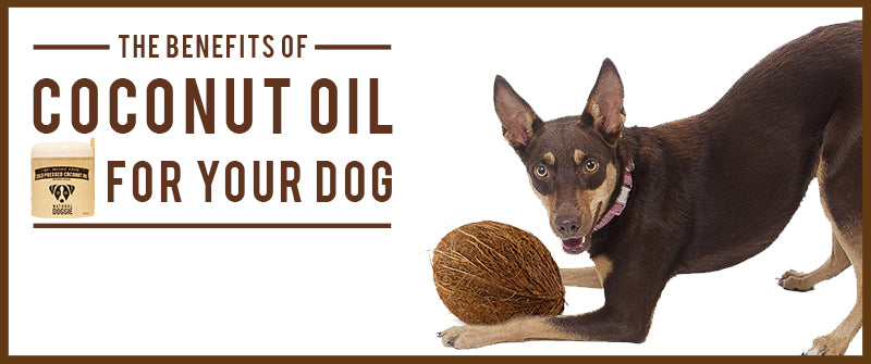 Can I Put Coconut Oil On Dog Skin