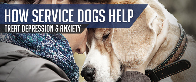 SitStay Blog How Service Dogs Help Treat Depression & Anxiety