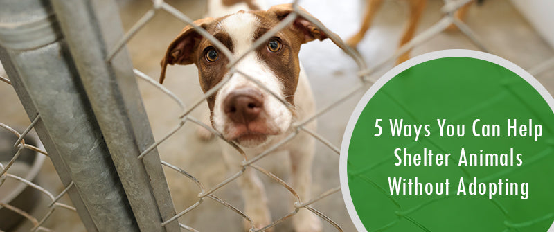 SitStay Blog 5 Ways You Can Help Shelter Animals Without Adopting