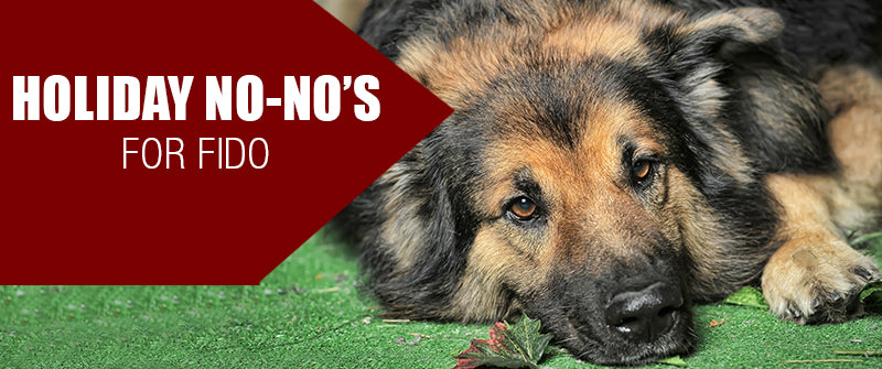 "SitStay Blog Holiday ""No-No's"" for Fido"