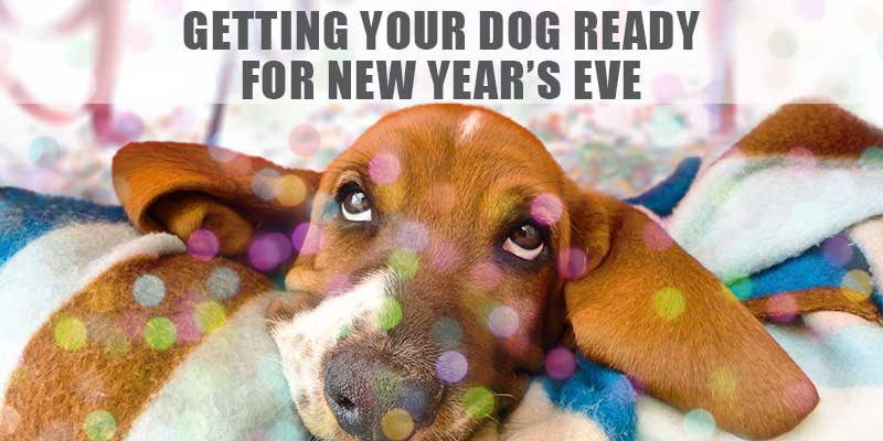 SitStay-Blog-Getting-Your-Dog-Ready-For-New-Year's-Eve-Image