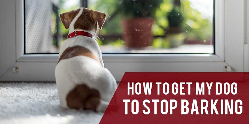 SitStay-Blog-How-To-Get-My-Dog-To-Stop-Barking-Image