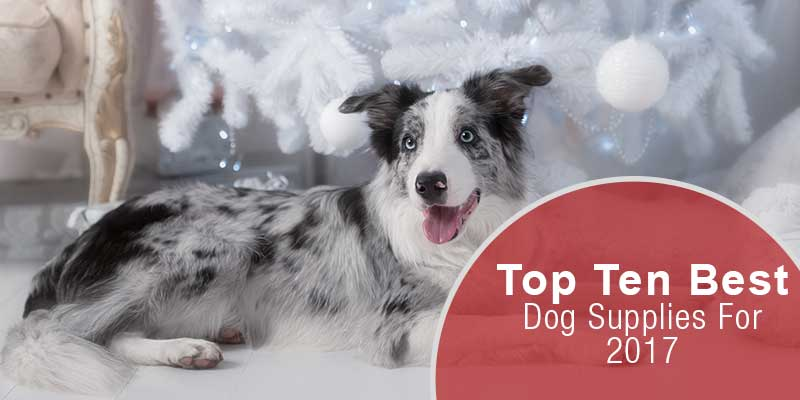 SitStay-Blog-Top-10-Best-Dog-Supplies-For-2017-Image