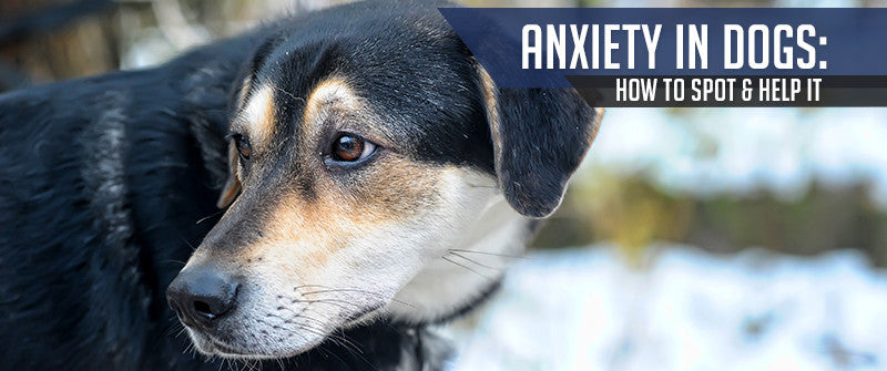 SitStay Blog: Anxiety In Dogs: How To Spot And Help It