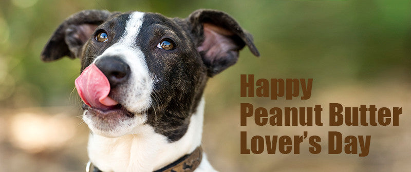 SitStay Blog Happy Peanut Butter Lover's Day