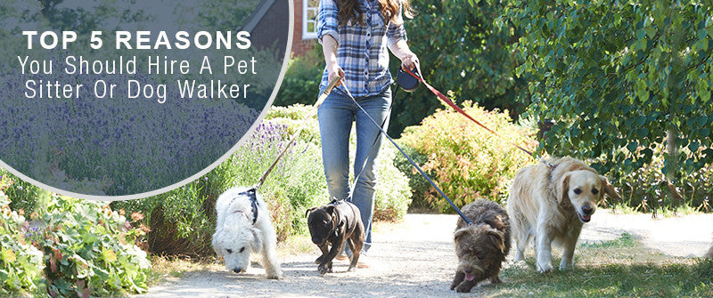 SitStay Blog Top 5 Reasons You Should Hire A Pet Sitter Or Dog Walker