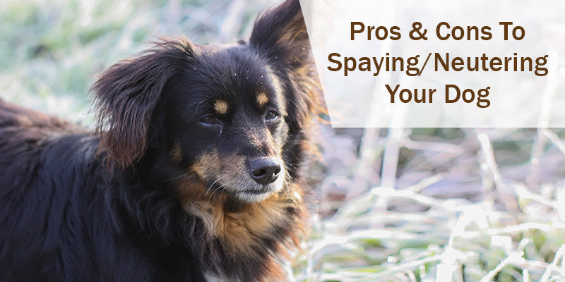 SitStay-Blog-Pros-Cons-To-Spaying-And-Neutering