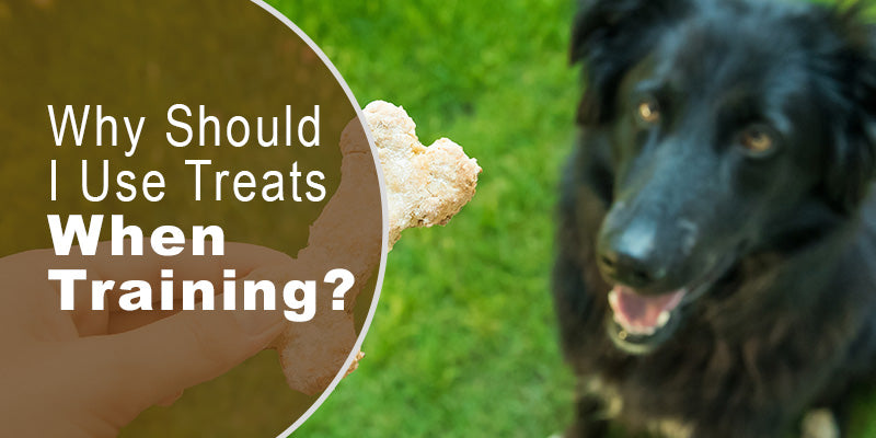SitStay-Blog-Why-Should-I-Use-Treats-When-Training