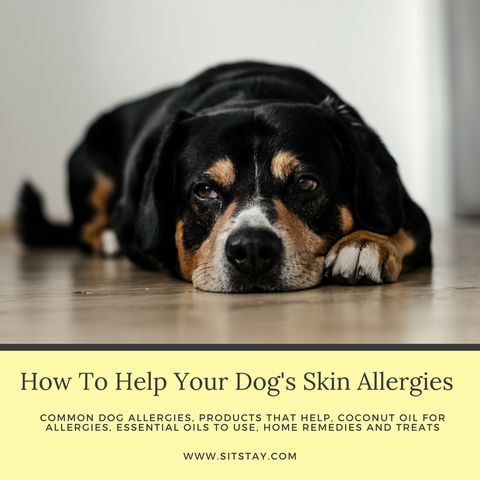 how to help dog skin allergies