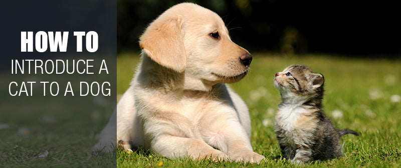 SitStay blog: How To Introduce A Cat To A Dog