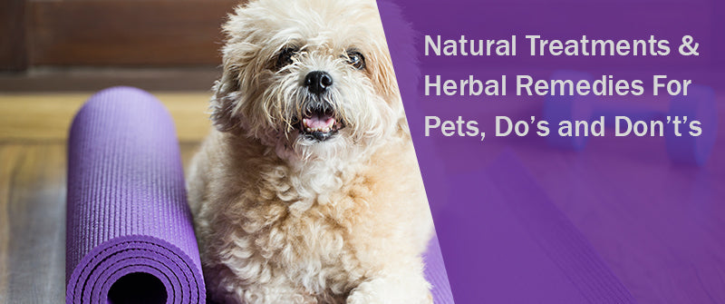 SitStay Blog Natural Treatments & Herbal Remedies For Pets, Do's and Don't's
