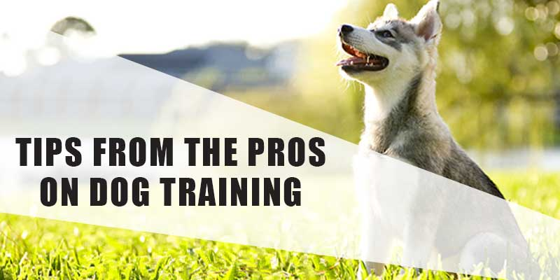 SitStay-Blog-Tips-From-The-Pros-On-Dog-Training-Image