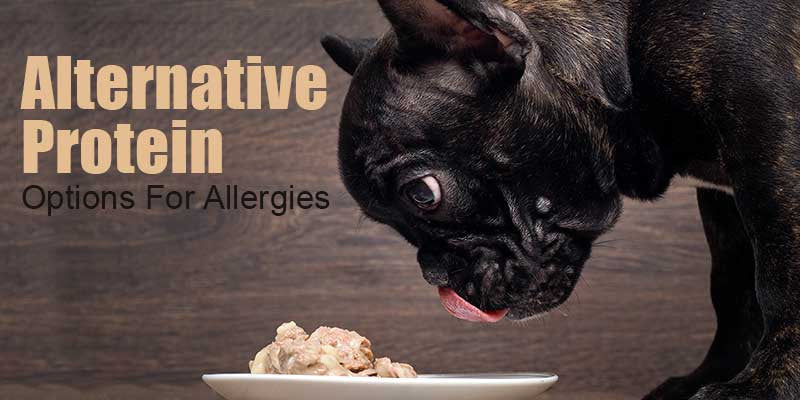 SitStay Blog: Alternative Protein Options For Allergies
