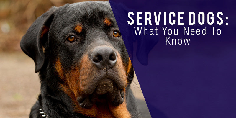 SitStay Blog Service Dogs: What You Need To Know