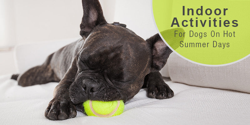 SitStay Blog: Indoor Activities For Your Dog On Hot Summer Days