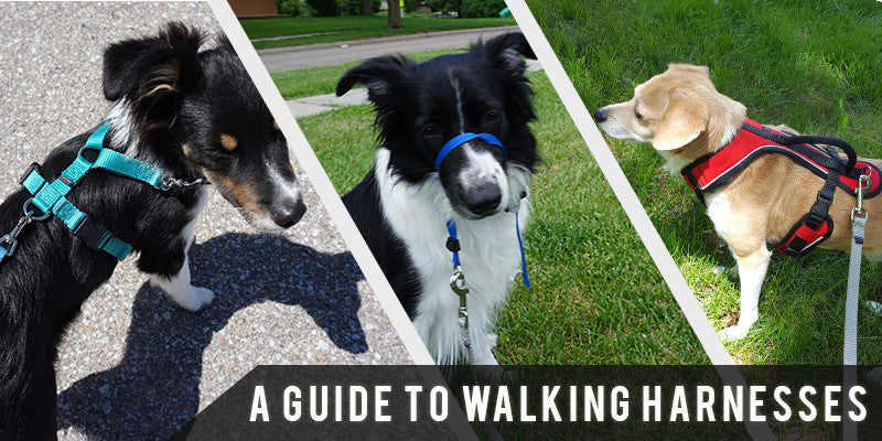 SitStay Blog: A Guide To Walking Harnesses