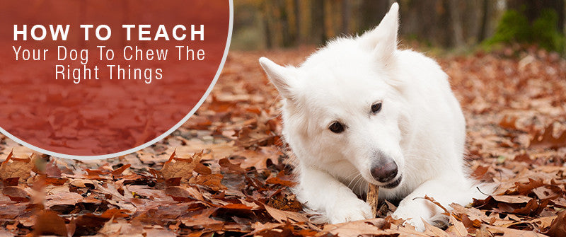 SitStay Blog: How To Teach Your Dog To Chew The Right Things