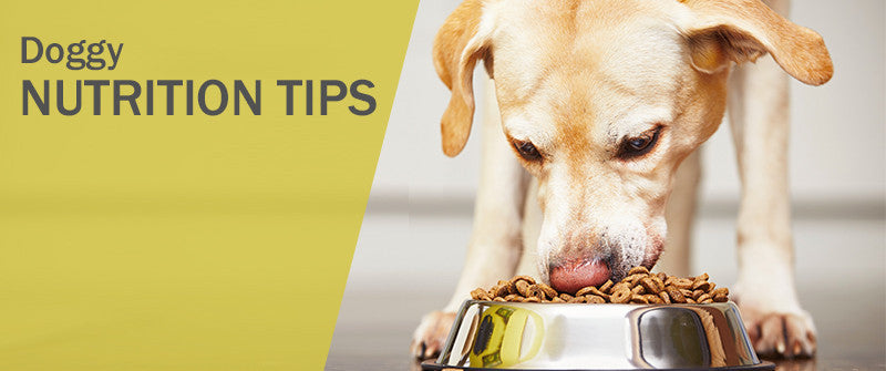 SitStay Blog: Doggy Nutrition Tips