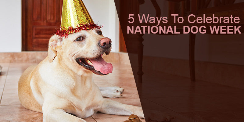SitStay Blog: 5 Ways To Celebrate National Dog Week