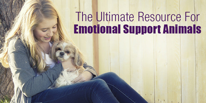 SitStay Blog: The Ultimate Resource For Emotional Support Animals (ESA)