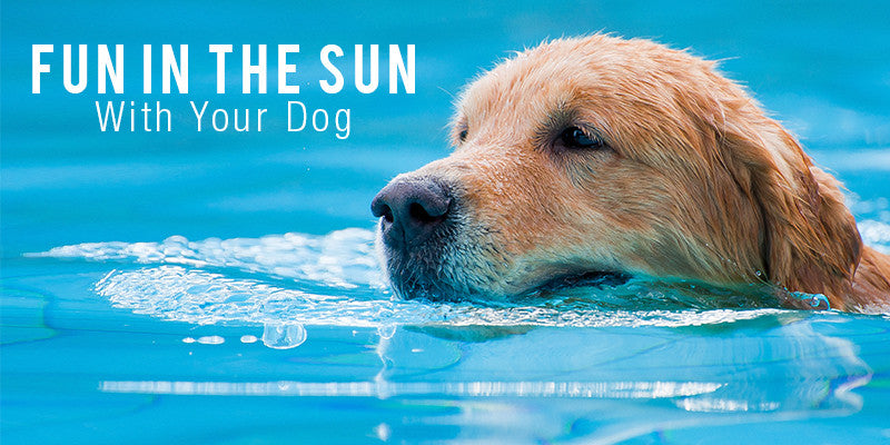 SitStay Blog: Fun In The Sun With Your Dog