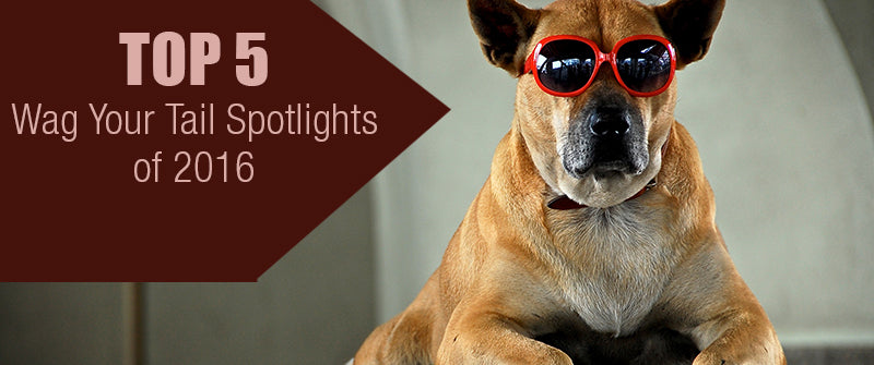 SitStay Blog Top 5 Wag Your Tail Spotlights of 2016