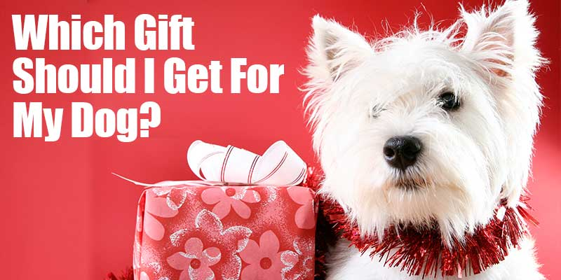 SitStay Blog: Which Gift Should I Get For My Dog?