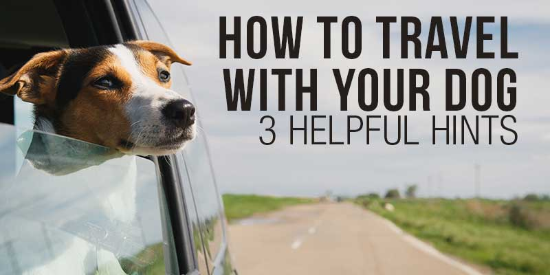 SitStay Blog: How To Travel With Your Dog - 3 Helpful Hints