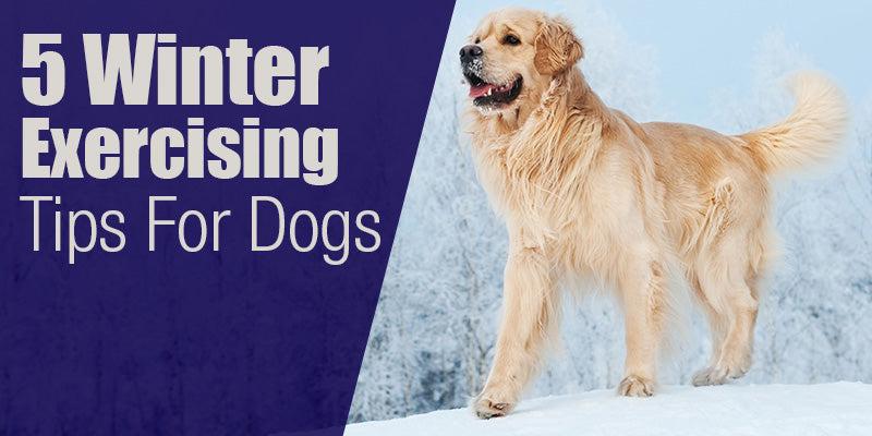 SitStay Blog: 5 Winter Exercising Tips For Dogs