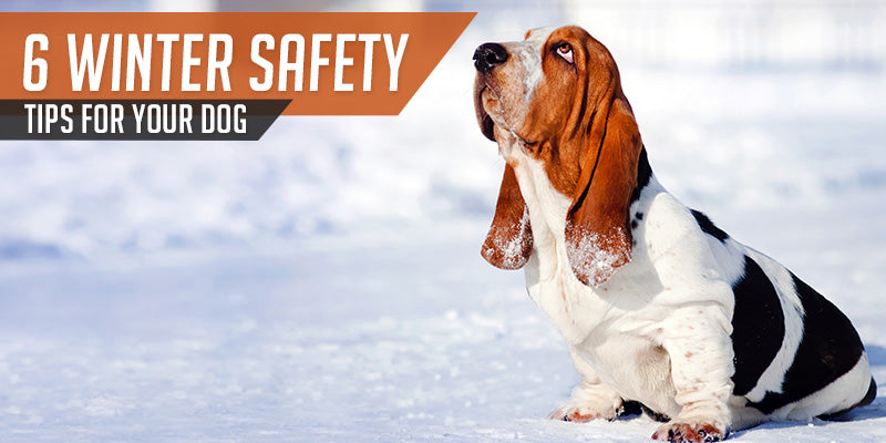 SitStay Blog: 6 Winter Safety Tips For Your Dog