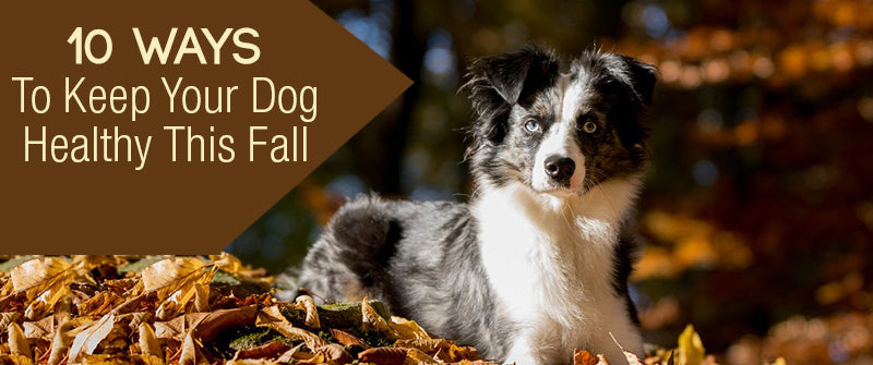 SitStay Blog 10 Ways To Keep Your Dog Healthy This Fall