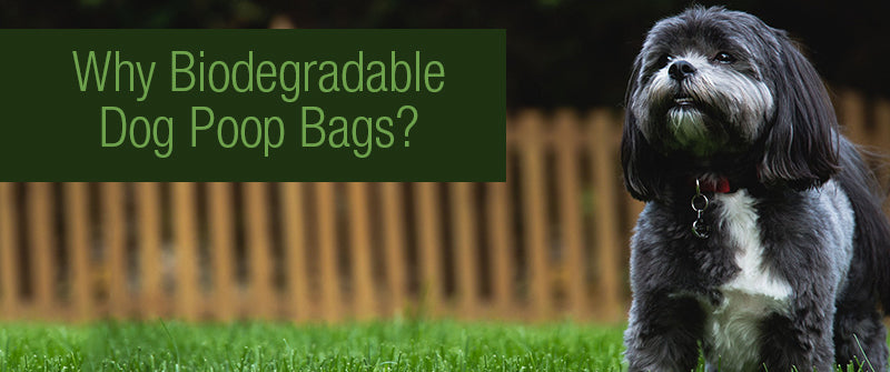 SitStay Blog Why Biodegradable Dog Poop Bags?