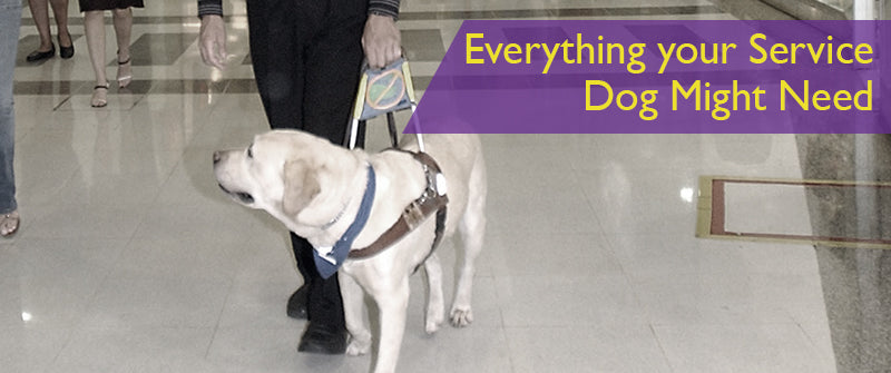 SitStay Blog Everything your Service Dog Might Need