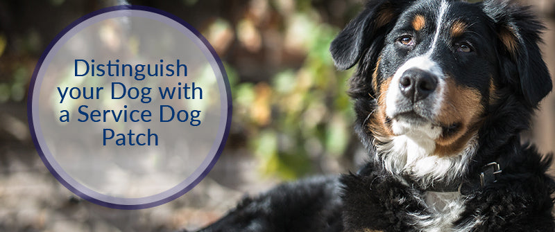 SitStay Blog Distinguish your Dog with a Service Dog Patch