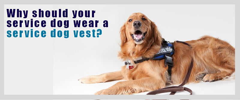 SitStay Blog Why your Service Dog should wear a Service Dog Vest